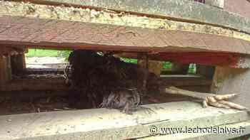 Aire-sur-la-Lys : qui a tué les poules du jardin partagé ? - L'Écho de la Lys