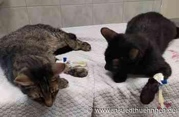 Oberzella: Fünf Katzen vergiftet: Anzeige erstattet - inSüdthüringen - inSüdthüringen