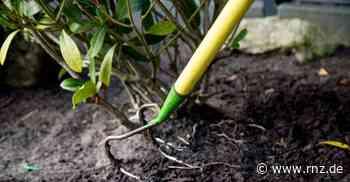 Pflanzen mit Turboantrieb: Rasend schnell zum grünen Garten - Rhein-Neckar Zeitung