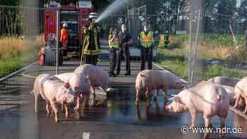 35 Schweine nach Unfall bei Sittensen verendet - NDR.de