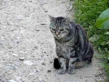Opération de capture des chats errants - Le Journal du Centre