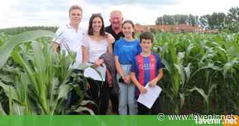 Labyrinthe et escape game dans le maïs au Bizet (Ploegsteert) - l'avenir.net