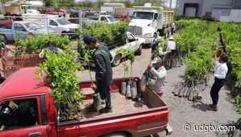 SADER Jalisco entrega material vegetativo a productores de limón de Jamay y Poncitlán - UDG TV