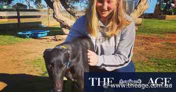 'I want an explanation': Spate of dog deaths linked to pet food - The Age