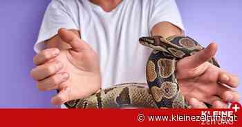 Psychologisch betrachtet: Schlangen: Warum wir uns so sehr vor diesen Tieren fürchten - Kleine Zeitung
