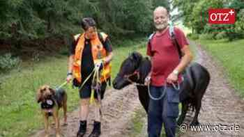 Ausreißer-Pony nach Aufruf in OTZ wieder auf der Koppel - Ostthüringer Zeitung