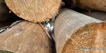 In Holzstapel eingeklemmt: Feuerwehr rettet Katze in Lindlar - Kölner Stadt-Anzeiger