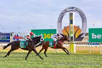 Adelaide Ace back in winning form in the Swan Hill Cup - Sports News