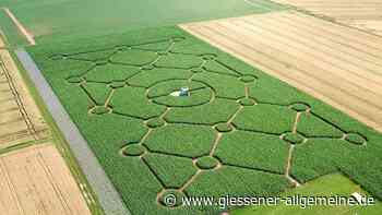 Maislabyrinth öffnet am 23. Juli - Gießener Allgemeine