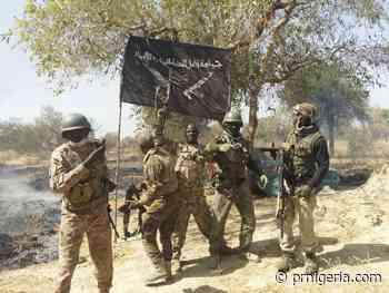 Troops Nab Several B'Haram Terrorists in Bultimari Forest, Yobe State - PR Nigeria