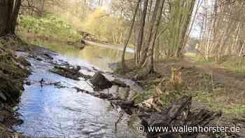 Klimaschutz: Überflutungsvorsorge und Regenwassernutzung - Wallenhorster.de