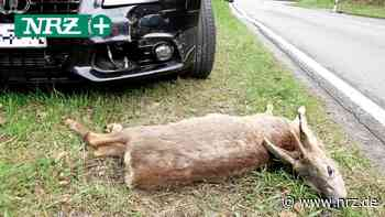 Emmerich: Bereits acht Wildunfälle auf dem A 3-Zubringer - NRZ News