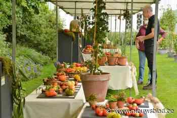 Tomatenfestival met 200 rassen (Kalmthout) - Het Nieuwsblad