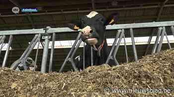 Koeienmest uit Kalmthout voorziet 60 gezinnen én Werchter Pa... (Kalmthout) - Het Nieuwsblad