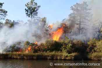 Porto-Vecchio : un incendie parcourt plus de 5 hectares Porto-Vecchio - Corse Net Infos