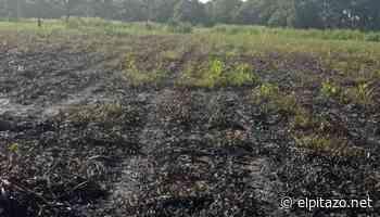 Portuguesa   Derrame de petróleo afecta cultivos y ecosistema en Araure - El Pitazo