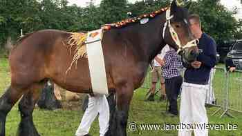 Trekpaardenkeuring in Torhout: Martine du Blanc Bois dagkampioene - Landbouwleven