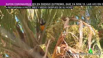 Paco 'el guacamayo' ya está en casa: así han logrado rescatarle tras ser secuestrado hace un mes y med - laSexta