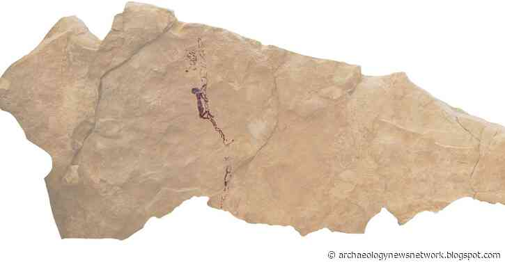 Well-preserved cave painting of honey gathering found in Spain