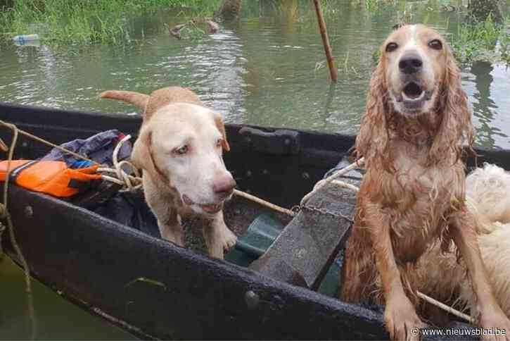 Vriendinnen slaan handen in elkaar voor inzamelactie overstroomde dieren
