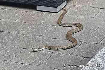 Bewoners vinden twee dagen op rij slang in tuin
