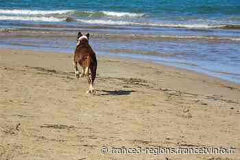 A Berck et Fort-Mahon-Plage, le label Toutourisme assure des vacances sereines pour les familles et leur chien - France 3 Régions