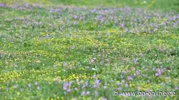 Heusenstamms Stadtparlament beschließt, auf öffentlichen Flächen künftig Blühwiesen entstehen zu lassen - op-online.de