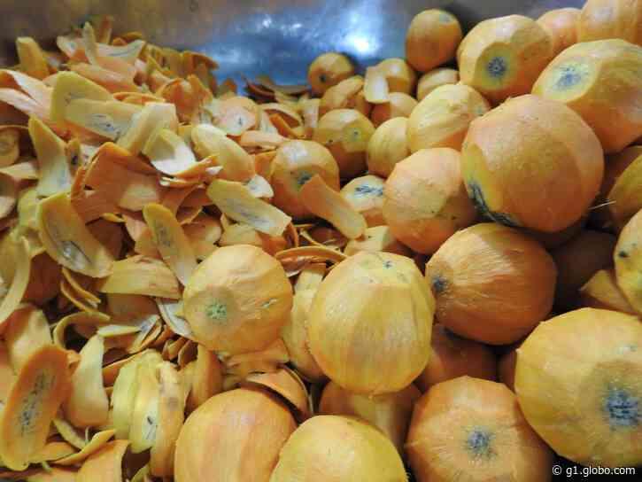 Consumo de tucumã em casos de infecção alimentar em Manacapuru (AM): o que se sabe até agora - G1