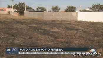Porto Ferreira notifica 1.640 donos de terrenos por falta de limpeza e queimadas criminosas - G1