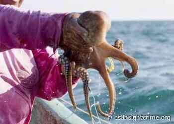 Estado de Yucatán en México: foco de pesca ilegal - insightcrime.org