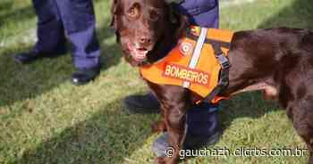 Com equipe que atuou em Brumadinho, bombeiros e cães de Santa Maria auxiliam em buscas no prédio da SSP - GZH