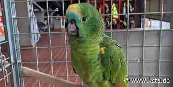 Wesseling: Feuerwehr sucht Besitzer eines davongeflogenen Papageis - Kölner Stadt-Anzeiger