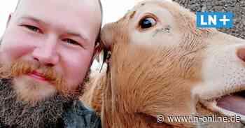 Stockelsdorf: Erik Kolmorgen bietet Kuhkuscheln und Schweine-Leasing an - Lübecker Nachrichten