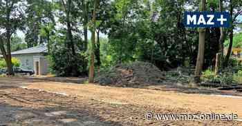 Teltow: Fällungen am Sabersky-Park bereiten Bauvorhaben vor - Märkische Allgemeine Zeitung
