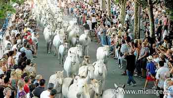 Lunel : la manade Puig au cœur de la journée du terroir - Midi Libre