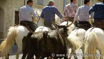 Lunel : découvrez le programme de la Pescalune 2021 - Hérault-Tribune