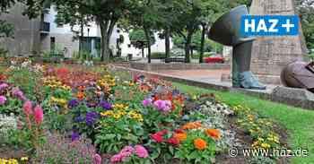 Seelze: 180 Blumen am Obentrautdenkmal gepflanzt - Hannoversche Allgemeine
