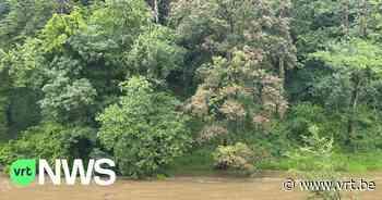 Kampen stopgezet door wateroverlast: Scouts Harelbeke en KSA Kuurne keren terug naar huis - VRT NWS