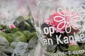 Vrijwilligers gezocht voor plantjesweekend van Kom op tegen Kanker - Gazet van Antwerpen