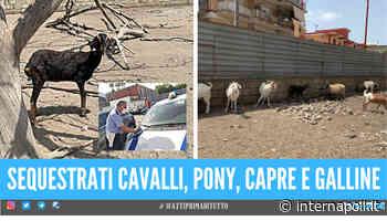 Arzano. Animali malnutriti e lasciati sotto il sole rovente, denunciato il proprietario - Internapoli