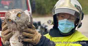 Allauch : un Jean-le-Blanc blessé secouru par les pompiers - La Provence