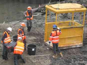 A Pont-Audemer, une pêche électrique pour sauvegarder les poissons avant les travaux de la passe - actu.fr