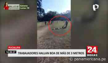 Trabajadores del Parque Natural de Pucallpa hallaron a boa de más de 3 metros - Panamericana Televisión