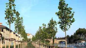Berdoues s'engage pour la voûte arborée du canal de Cugnaux - ladepeche.fr