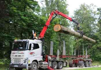 Un chêne du parc du château de Sully-sur-Loire enlevé ce vendredi pour reconstruire la flèche de Notre-Dame de Paris - La République du Centre