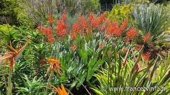 Jardin. Le jardin des Îles, à Sainte-Lucie de Porto-Vecchio, en Corse-du-Sud - Franceinfo