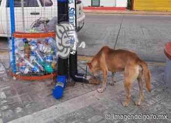 Esperan apoyo en beneficio de perros callejeros de Nanchital - Imagen del Golfo