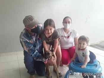 Cachorros vítimas de maus-tratos resgatados em Presidente Prudente são adotados e ganham novos lares - G1