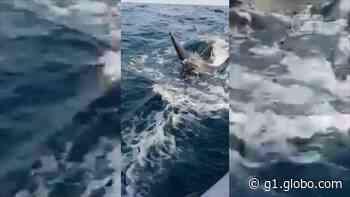 Orca cerca lancha em Arraial do Cabo, RJ; 'grata surpresa', diz mergulhador que registrou momento em vídeo - G1