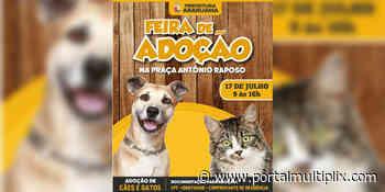 Feira de adoção de animais acontece neste sábado em Araruama - Portal Multiplix